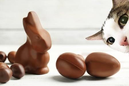 chat et chocolat