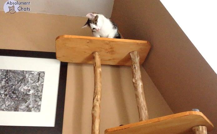 arbre à chat - Absolument Chats