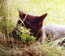 souip chat noir - absolument chats