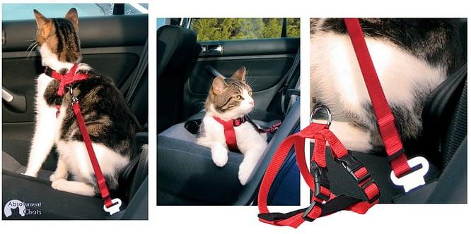 harnais-laisse-ceinture-de-securite-pour-chat