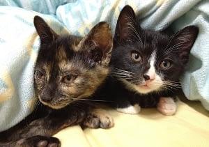cohabitation entre chat - absolument chats