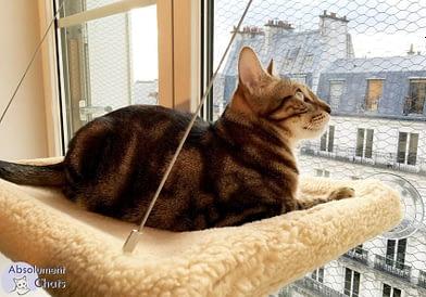 1-Chat hamac de fenêtre MadeForCats- AbsolumentChats