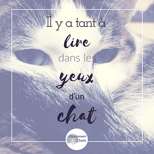 citation-chat-absolument-chats6