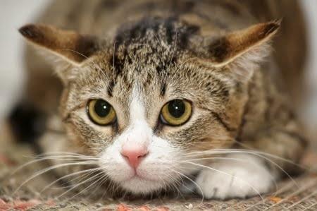 comment aider un chat peureux