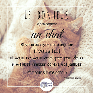 citation-chat-absolument-chats3