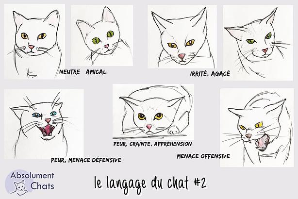 langage du chat-tete-absolumentchats