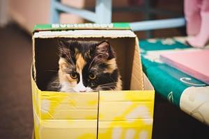 chat et demenagement