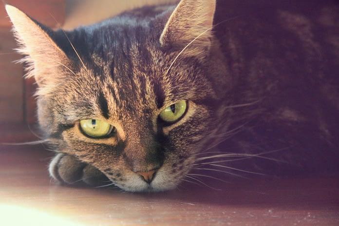 comment savoir si mon chat est malade