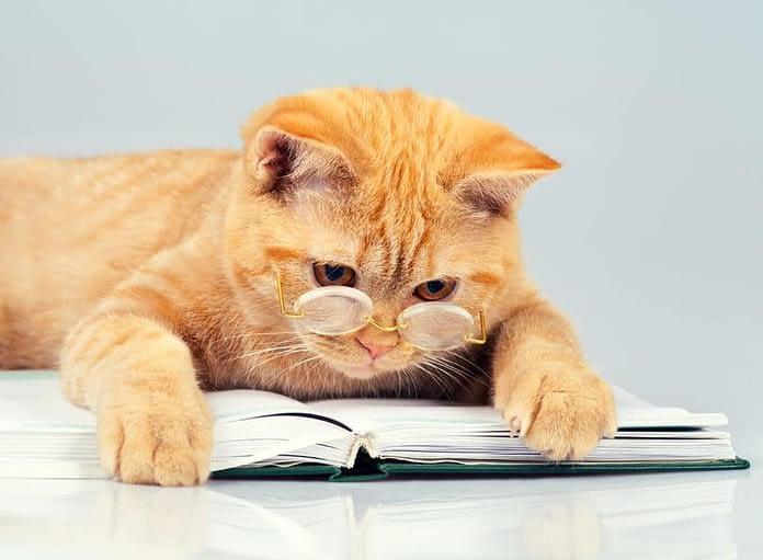 livres sur les chats - absolument chats