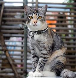 collier phosphorescent pour chat