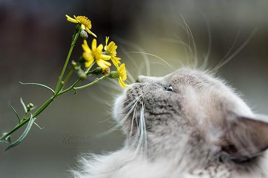 prendre de belles photos de son chat - patounes et moustaches - absolument chats