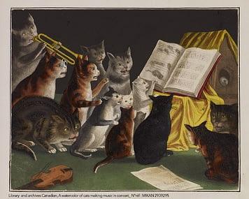 concert de chats