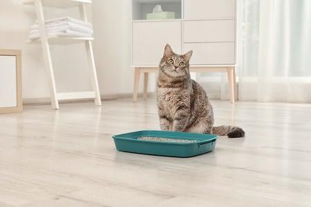 chat et litiere