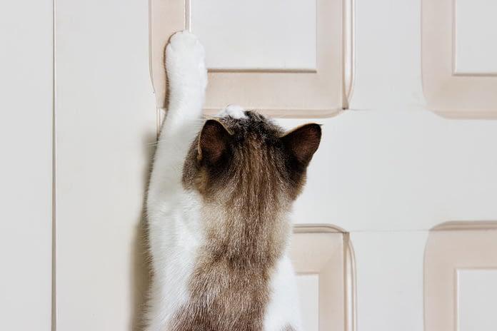 pourquoi les chats n aiment pas les portes fermees