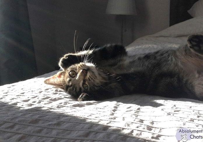un chat heureux en appartement - Absolument Chats