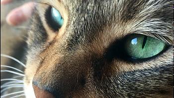 chat de race ou chat de gouttière, il faut respecter la nature profonde du félin