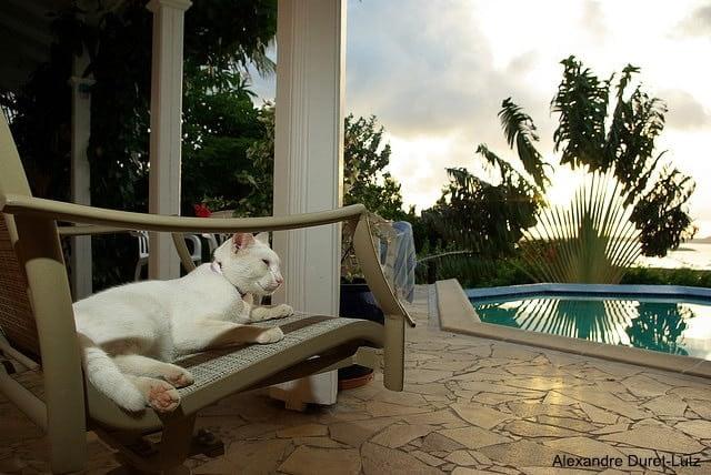 alexandre duret-lutz- chat en vacances