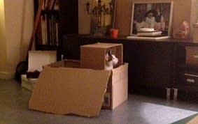 chat carton ! - Absolument Chats