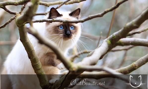 prendre de jolies photos de son chat- pierre thomas- chat beaute - absolument chats