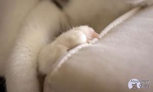 le chat ou l'importance des griffes - Absolument Chats