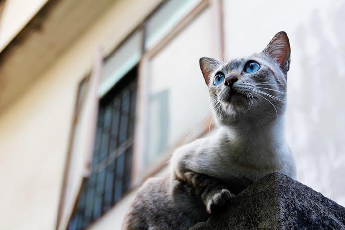 securiser fenetre balcon pour que le chat ne tombe pas